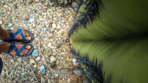 Cactus feet
