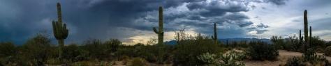 Cactus pan