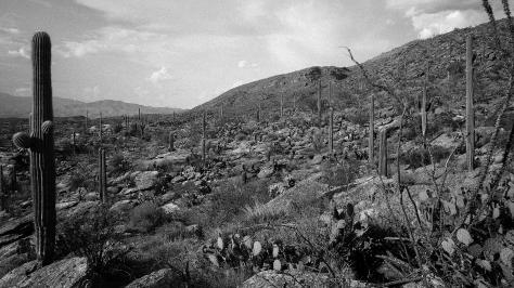 Saguaro scenes 2 (b&w)