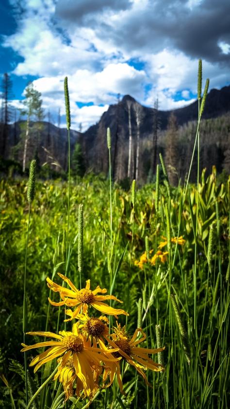 Wildflowers on Rainbow Trail