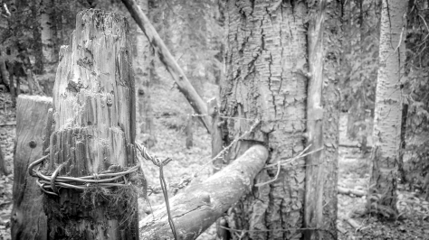 fence on frisco trail-bw