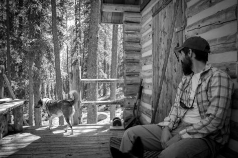 cabin moose explores