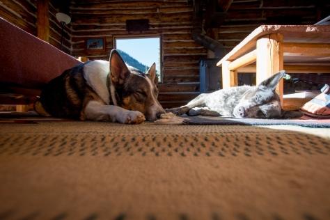 dog friendly 3