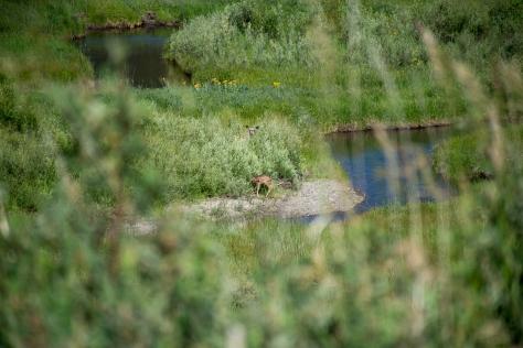 wildlife near tomichi lodge
