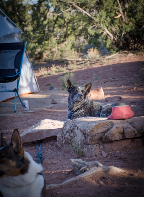 Fruita Camping-4