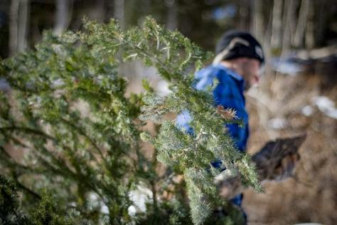 Tree Hunt_sm-19